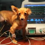 Кардиолог для собаки