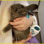 Узи кролику