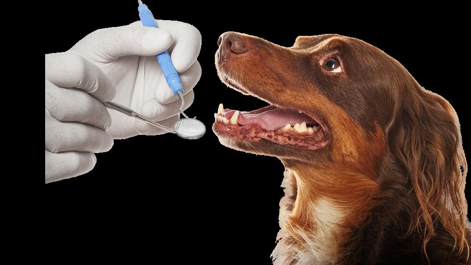 Ультразвуковая чистка зубов Тюмени