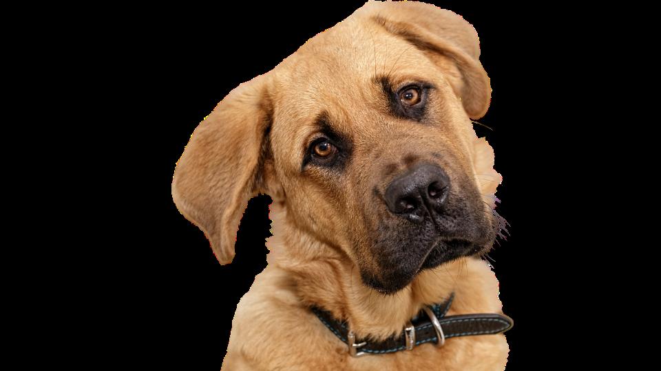 Кастрация собаки Тюмени